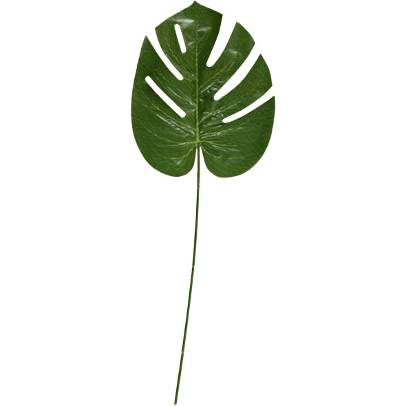 Blattstamm H:49cm