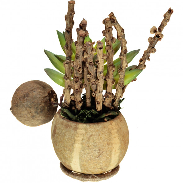 Bonsai Blume im Topf